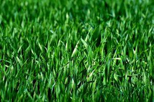 空き家の草は放置すると迷惑に…